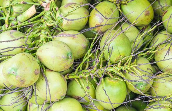 Manfaat kelapa Hijau Untuk Kesuburan